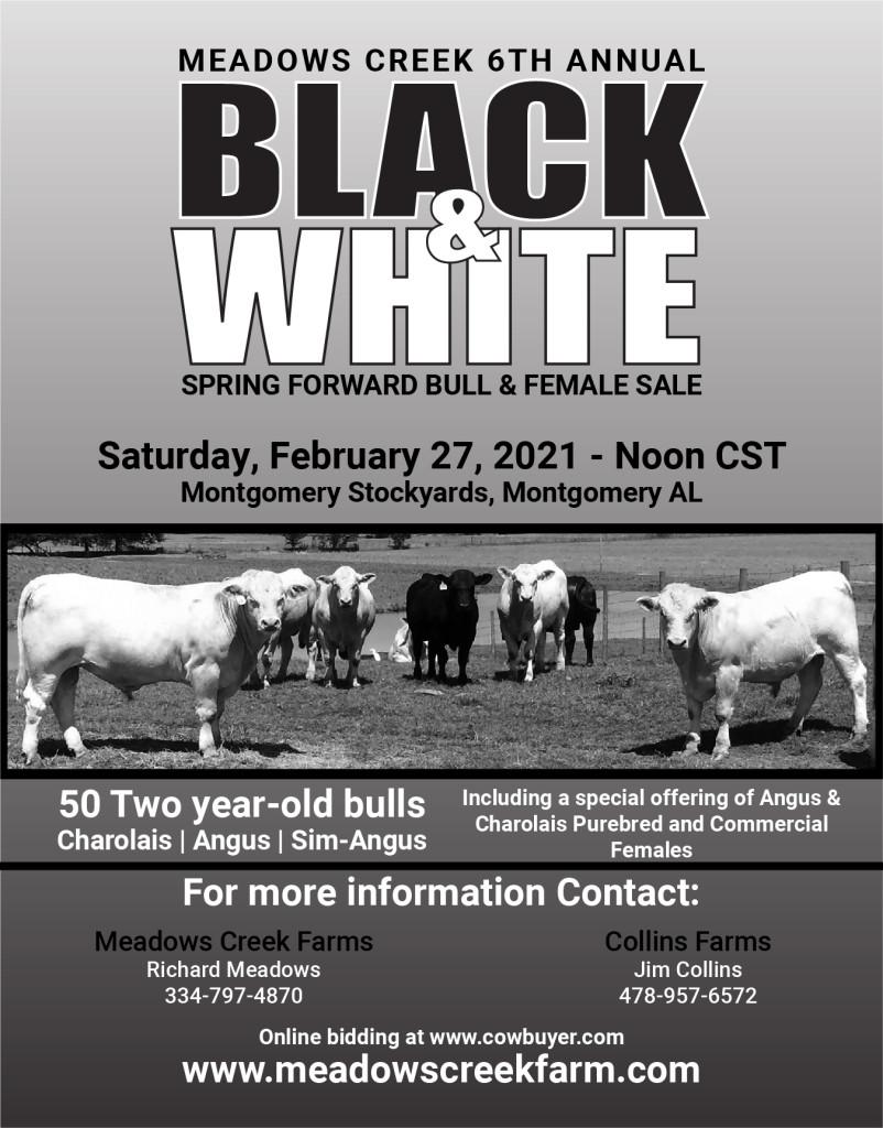 Meadows Creek Ad-Feb 2021 Bull Sale